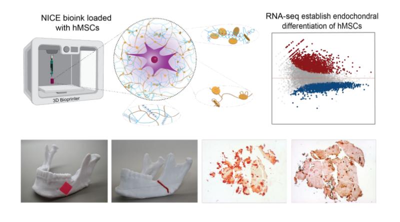 Nano Engineered BioInk